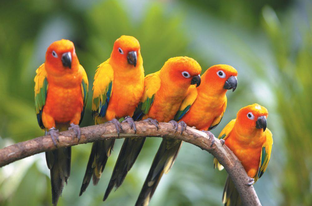 فدراسیون پرندگان زینتی جمهوری اسلامی ایران